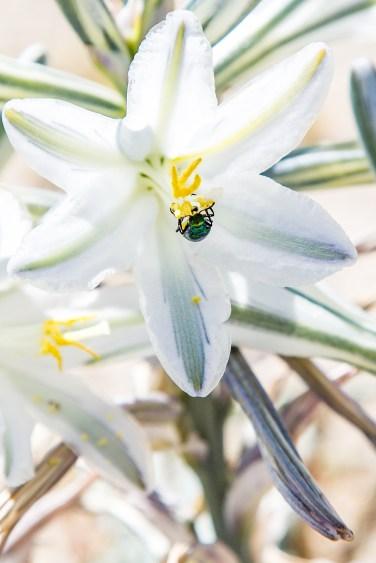 13Super Bloom