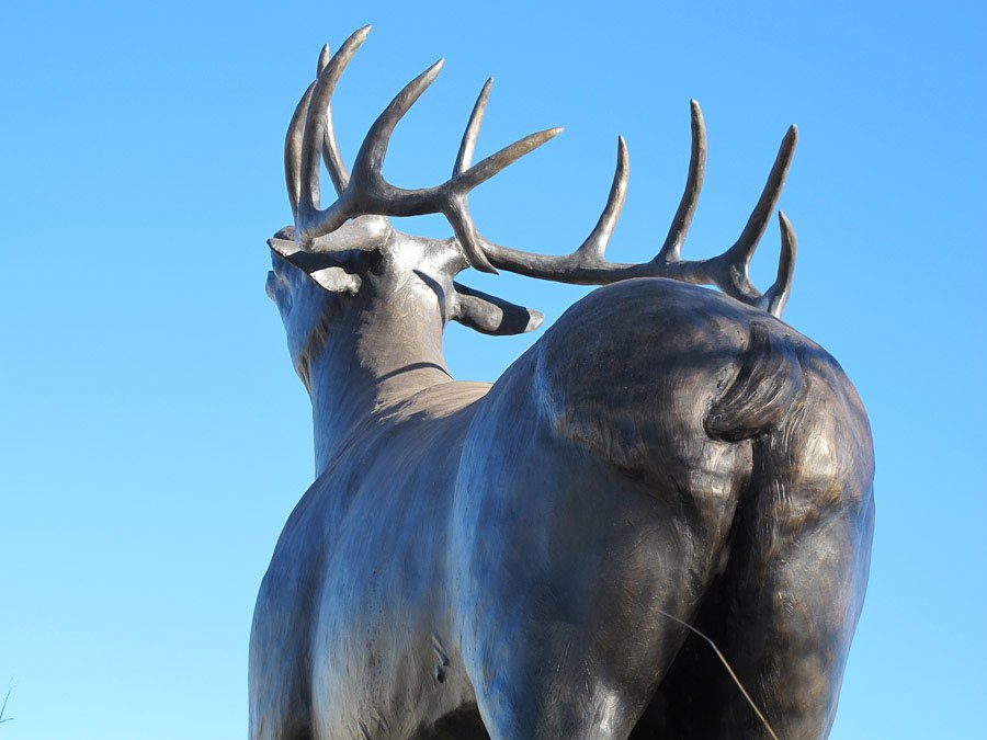 Elk in Elk City