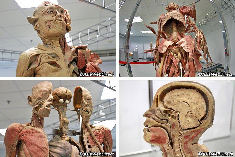 Human Body Museum