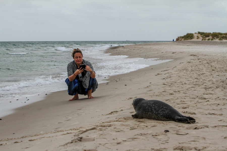 BringBlingToTraveling photo op with Seal at Grenen Denmark