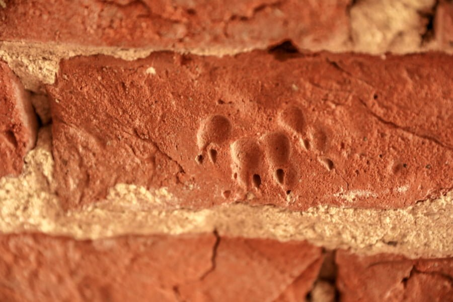 Malbork (Zamek) Castle Dog prints in an old brick