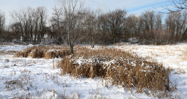 Developer Steve Liefschultz has proposed a 148-unit apartment complex on the southwest quadrant of Diffley Road and Nicols Road in Eagan, just west of the wetland pictured here. (Staff photo: Bill Klotz)