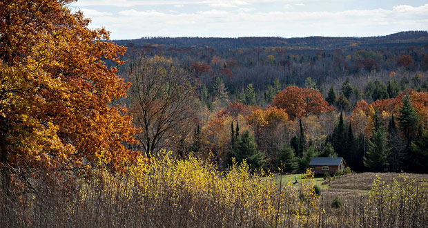 """Trees stand in a forest near Skanawan, Wisconsin. """"People flock to our state to enjoy our pristine waterways and hike our beautiful forests — these are resources that we will protect by maintaining stewardship funding,"""" the Assembly GOP platform says. (Bloomberg News file photo)"""