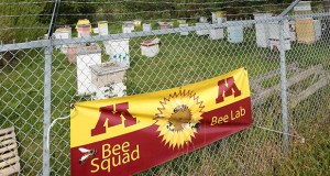 The University of Minnesota hopes to start construction next year on a new, $64.2 million Bell Museum of Natural History on this site at the southwest corner of Larpenteur and Cleveland avenues in St. Paul. The site is currently occupied by a bee research lab, which will be relocated. (Staff photo: Bill Klotz)