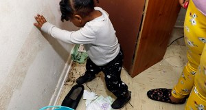 Destiny Johnson's 2-year-old son, Hayden Howard, steps on roaches Feb. 20 in his mother's apartment in Cedarhurst Homes, a federally subsidized, low-income apartment complex in Natchez, Mississippi. (AP photo: Rogelio V. Solis)