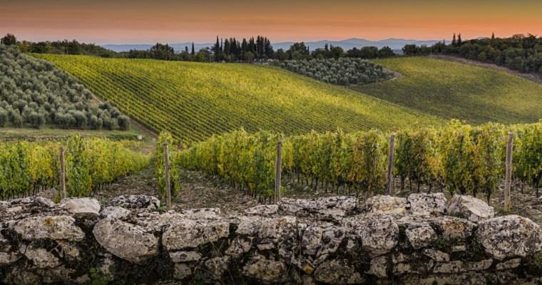 Castello di Ama Chianti Classico 2017: Too young to drink