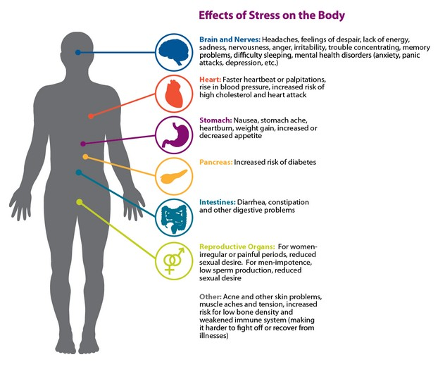 Effects of Stress on the Body