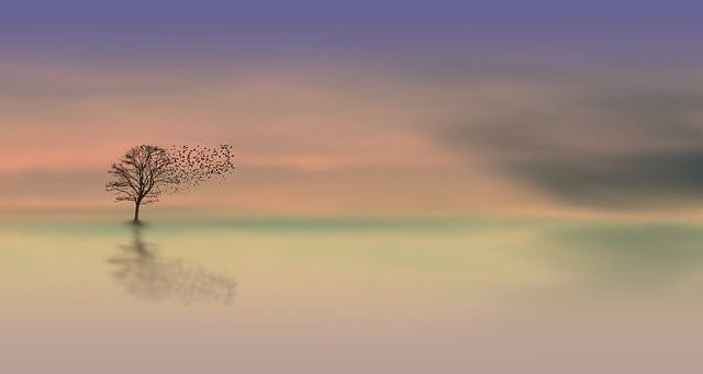 Photo of birds flying from a tree as a sign of semi-retirement