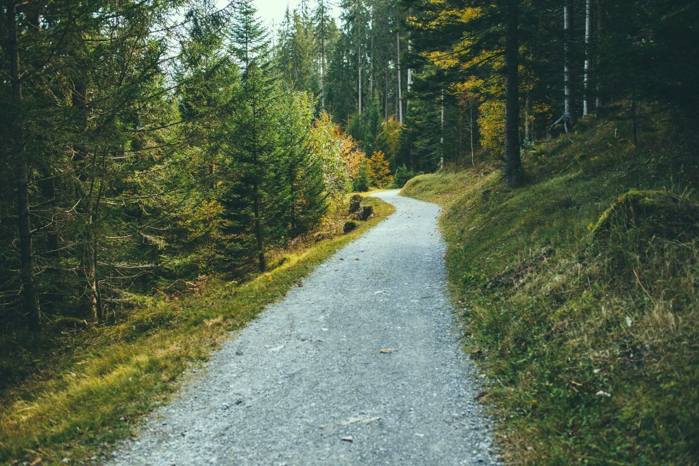 Financial Independence – The Path Not Taken