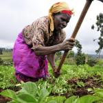 AfDB supports maize farmers in Ghana