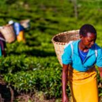 Multilateral groups sign charter to develop agro-ecology in Africa