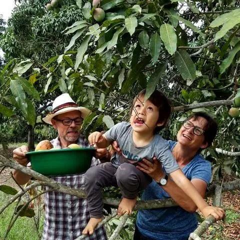 Recogiendo fruta fresca