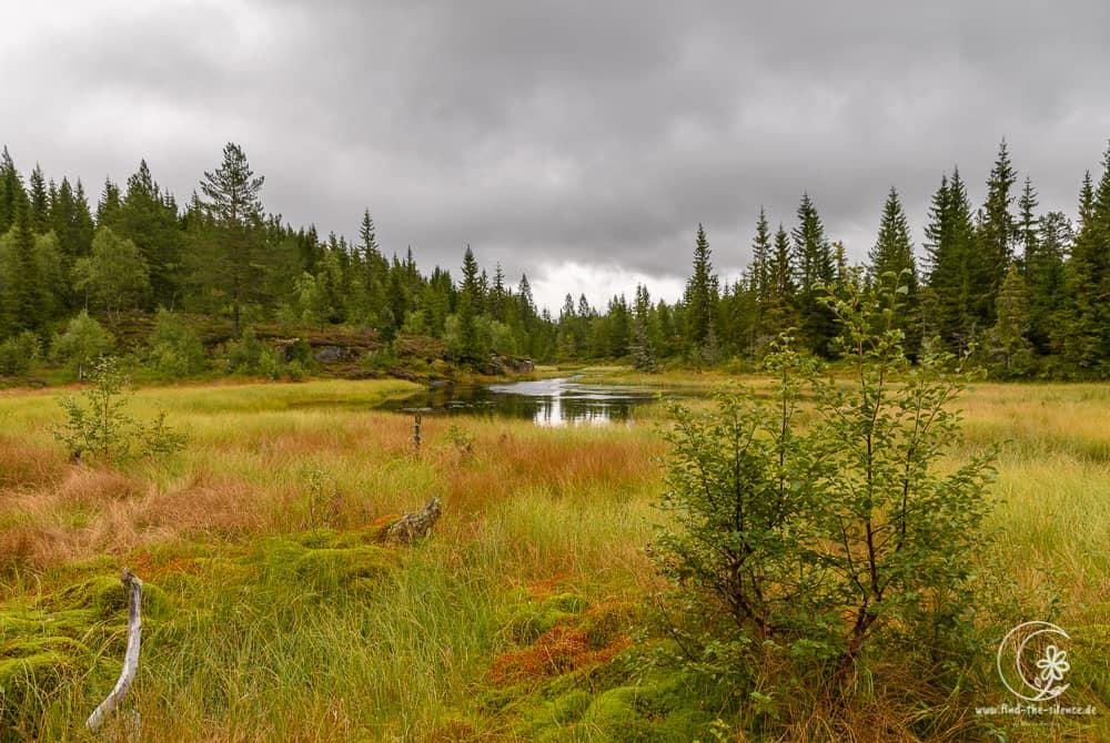 Traumhafte Heidelandschaften voller Einsamkeit und Ruhe!