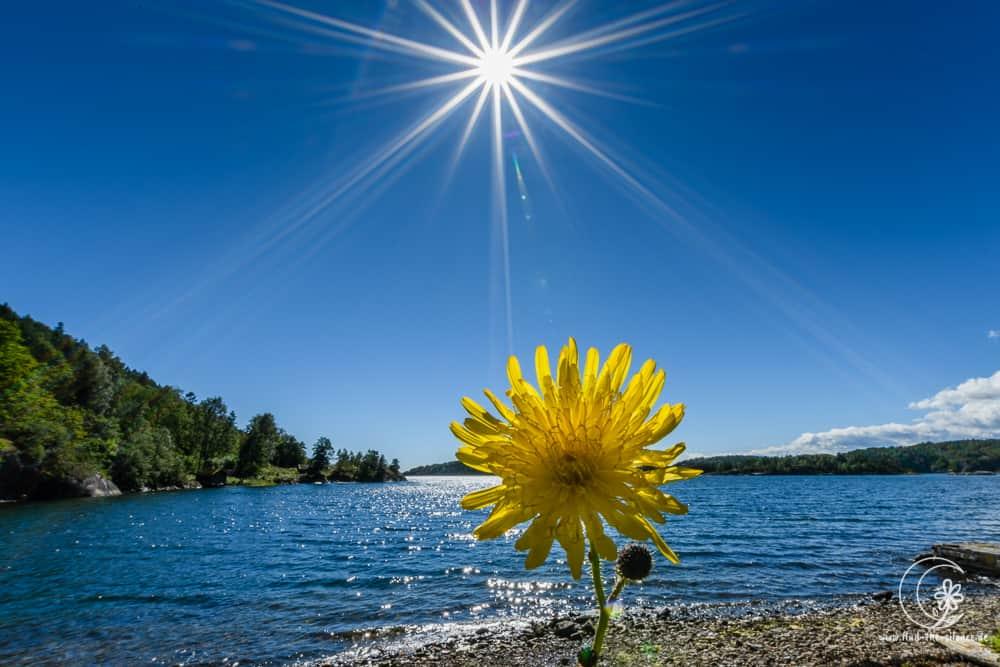 Blüte am Sonnenstrand