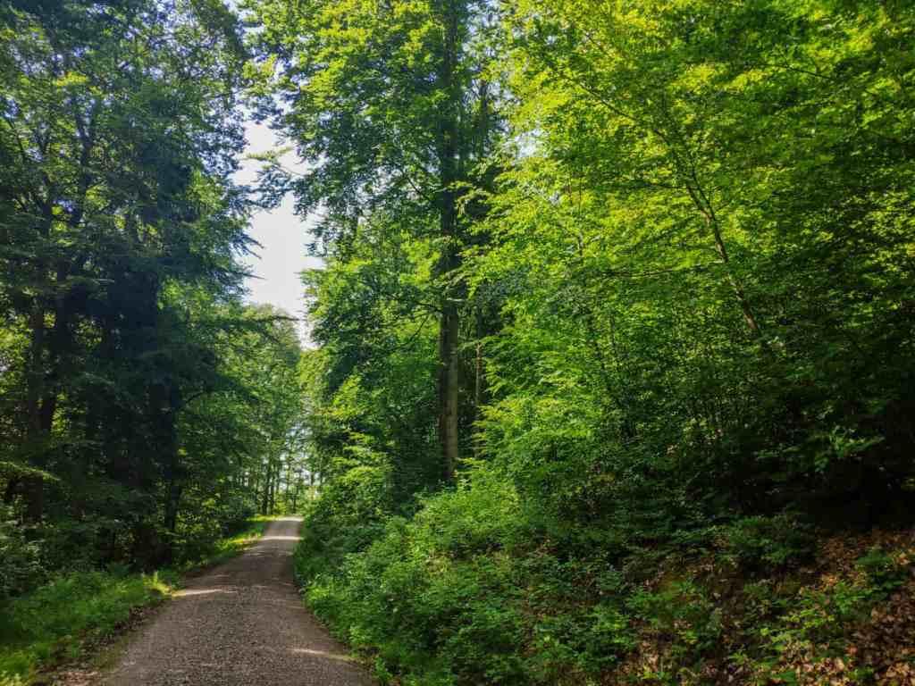 Der Wald im Spessart - Grüner gehts nimmer