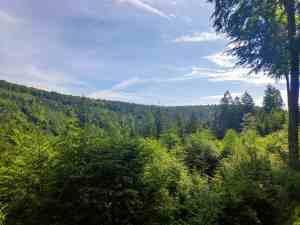 Wald so weit das Auge reicht