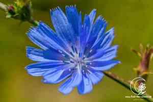 Blütentraum Harz