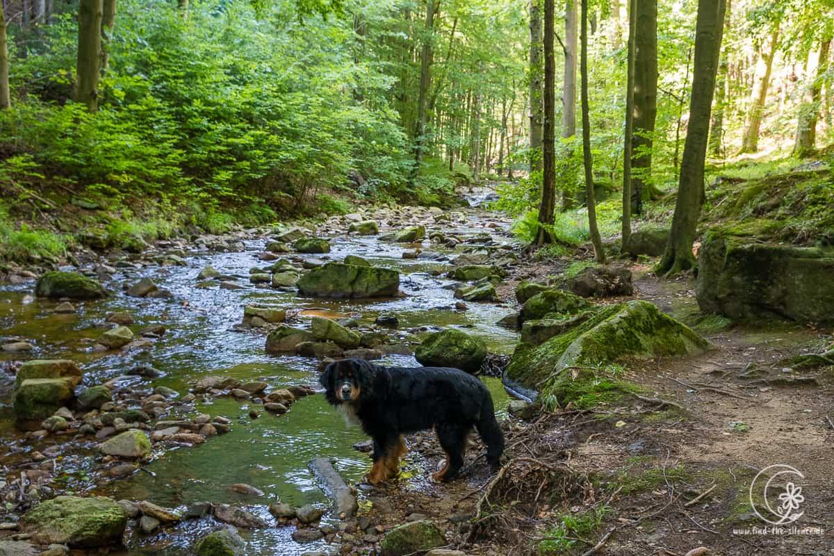 Toller Spaziergang auch für Hunde im Ilsetal