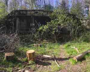 eingewachsener Bunker