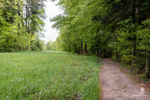 Wunderschöne Waldwege