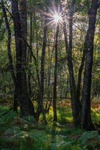 Stimmungsvoller Wald