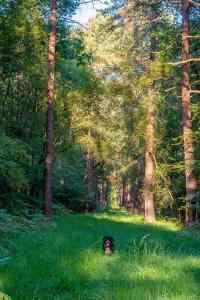 Merlin im Wald :-)