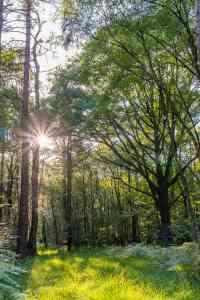 Abendlicht im Wald zu Brocéliande