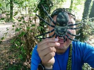 Spinnengeocache