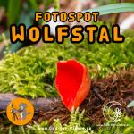 Fotospot Märzenbecherblüte im Wolfstal