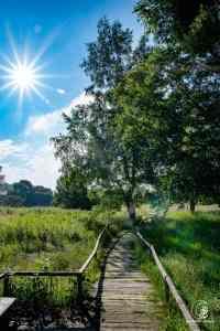 Sommer-Moor