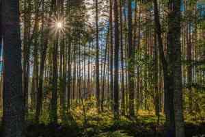 traumhafte Waldstimmung