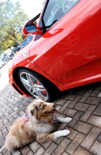 Ruby managed to steal some attention from the cars