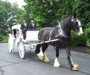 The Bride arriving in style