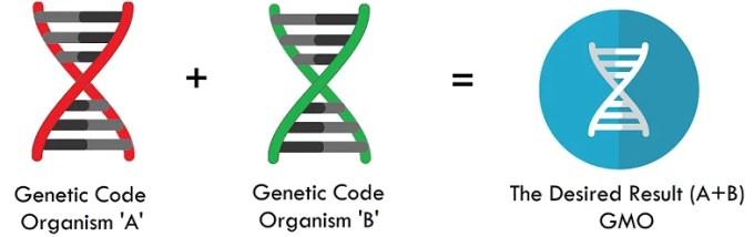 genetic engineering career path GMO