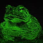Night belongs to the Toads 1