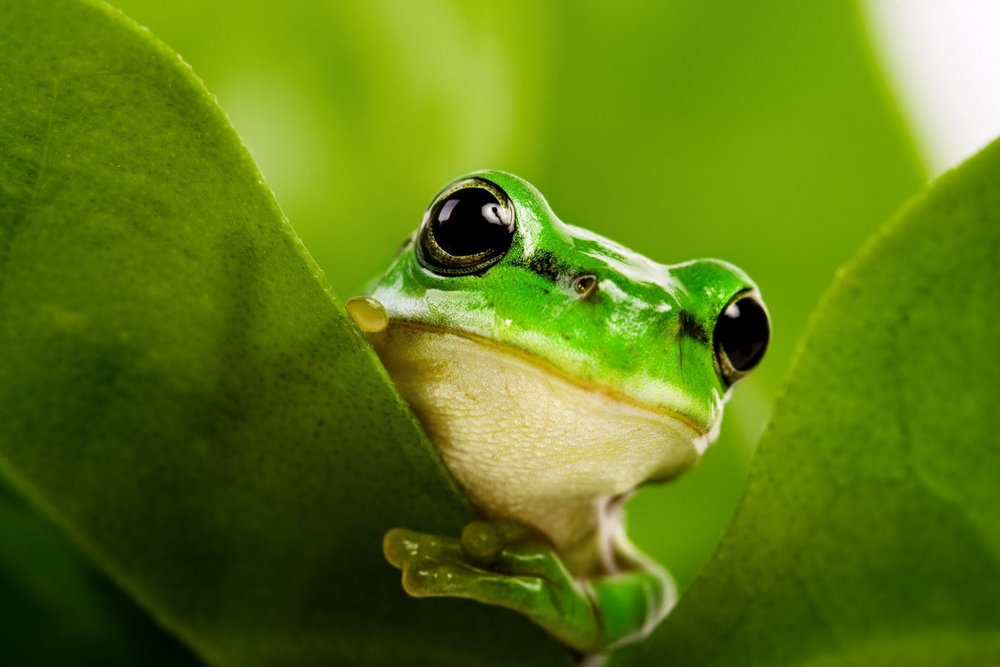 What Is The Difference Between A Frog And A Toad
