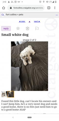 Craigslist Fort Collins Pets : craigslist, collins, Found, Dogs,, Cats,, Collins,, 80526, PawBoost