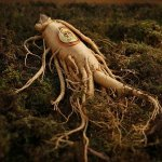 Natural Remedies for Anxiety: Ginseng