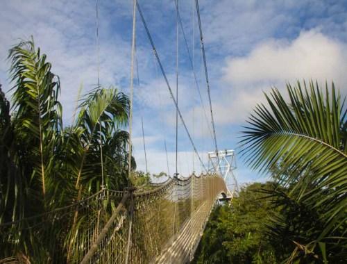 longest canopy walk in africa