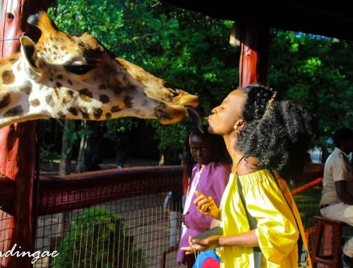 The Giraffe Center
