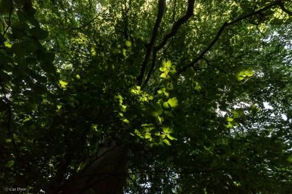 Shorne Woods, July 2015-16