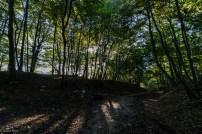 Darnley Trail-21