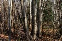 Shorne Woods-9