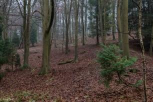 kings-wood-winter-20