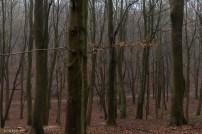kings-wood-winter-22