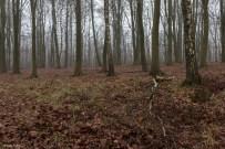 kings-wood-winter-23