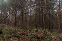 kings-wood-winter-27