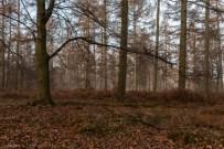 kings-wood-winter-9