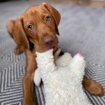 New Puppy Announcement Meet Tucker Finding Beauty Mom