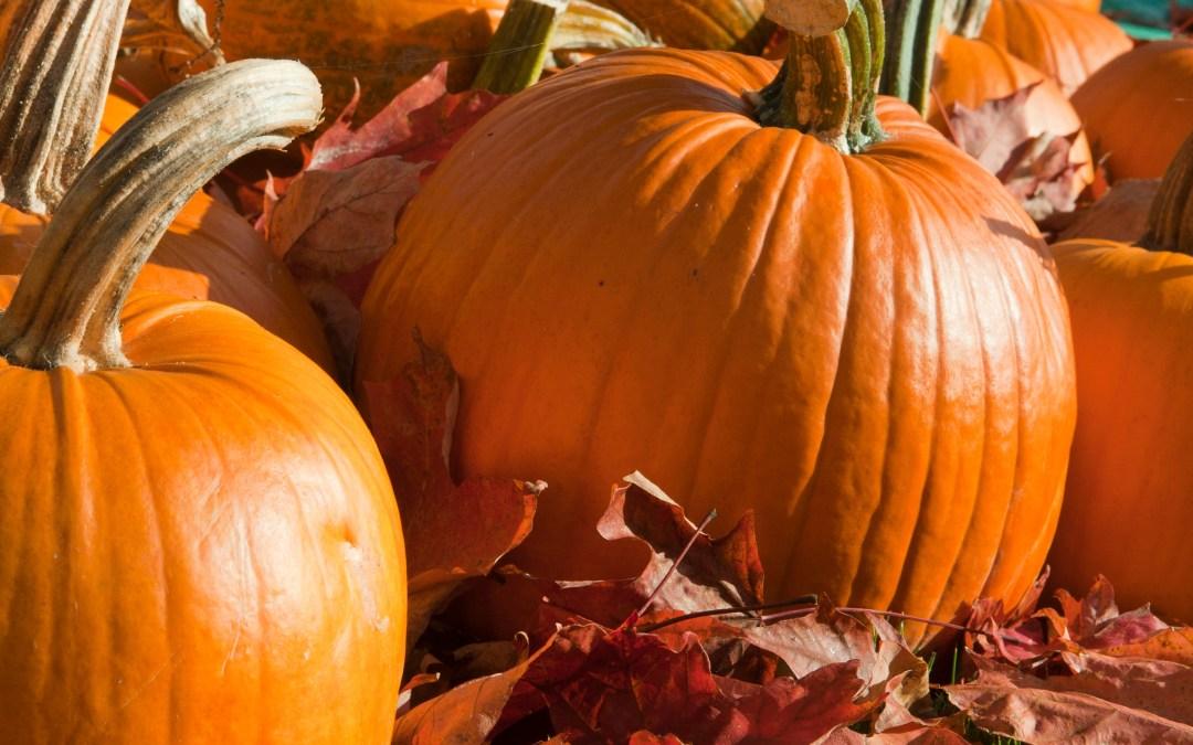 Welcome to Pumpkin Week